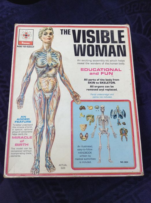 Renwall The Visible Woman Anatomy Model Kit Learn All About The
