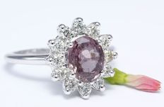 White Gold ring with 3.46 ct diamonds and purple sapphire made of 14 kt hallmarked white gold