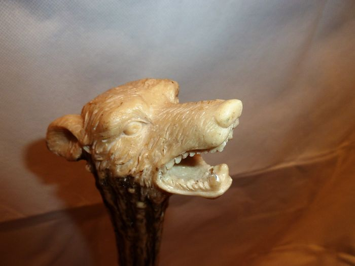 Walking stick with horn/antler handle in form of a wolf - Scotland - early 20th century