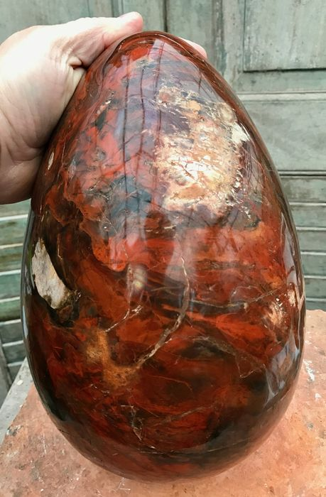 Huge egg of Petrified Wood with unique hues - 28 x 18cm - 13.05kg