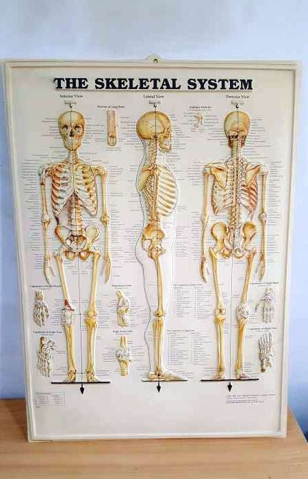 The Skeletal System Human Spine Disorder Wall Plates In Relief