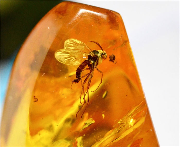 Baltic amber with  super fly inclusion. 4.47 grams