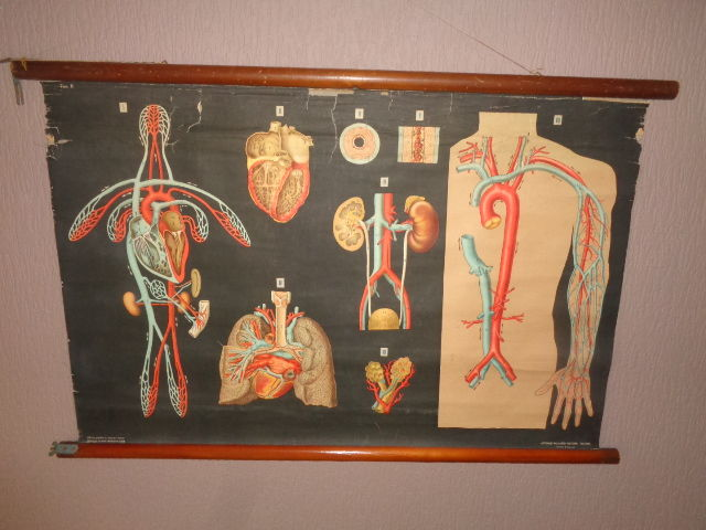 Old Italian Anatomical (blood circulation) school plate by Antonio Vallardi