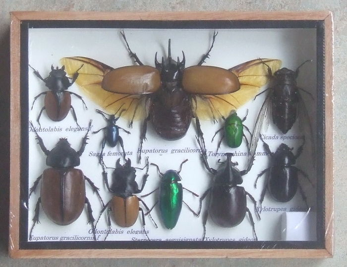 An interesting, cased collection of Exotic Insects - 20 x 15cm