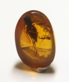 Burmite amber with insects - 10 x 7mm