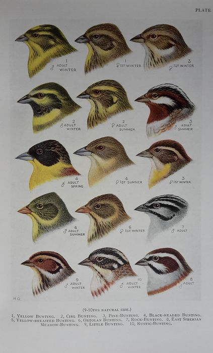 H.F. Witherby - The Handbook of British Birds, 5 volumes - 1938/1941