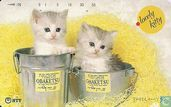 Lovely Kitty - Two in the bucket