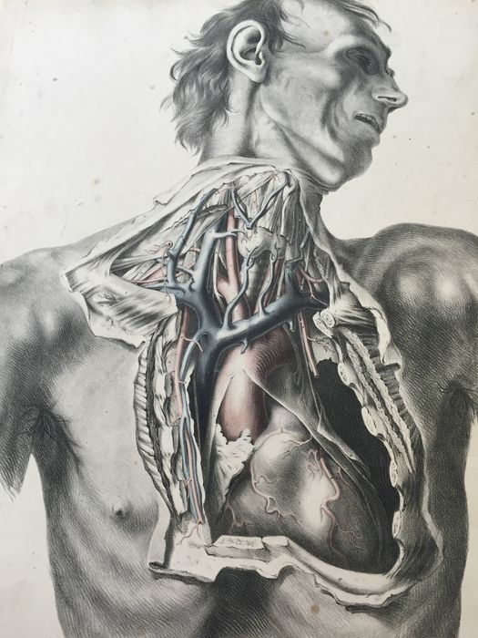 Richard Quain The Anatomy Of The Arteries Of The Human Body With