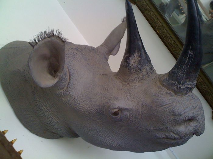 Outstanding, life-size wall-mounted White Rhinoceros replica head - Deyrolle, Paris - 65 x 125cm