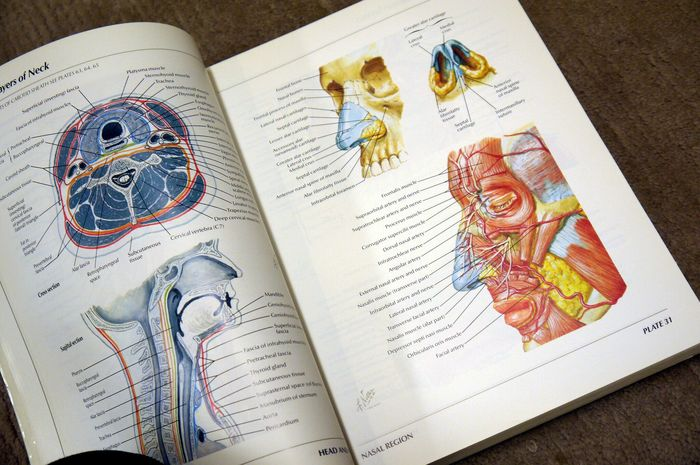 Frank Hter Atlas Of Human Anatomy 1995 Catawiki