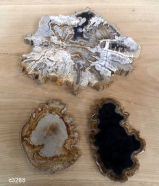 3 slabs of Petrified wood - 250, 150 and 130 mm.