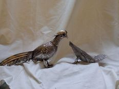 Silver pheasant and capercaillie, Spain, mid 20th century