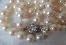 Akoya pearl necklace, 7.8 mm, with 30 rose diamonds in a 1st grade silver bayonet clasp.