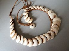Necklace for men (kualiasi) in conch pearls - Abelam - Sepik - Papua New Guinea