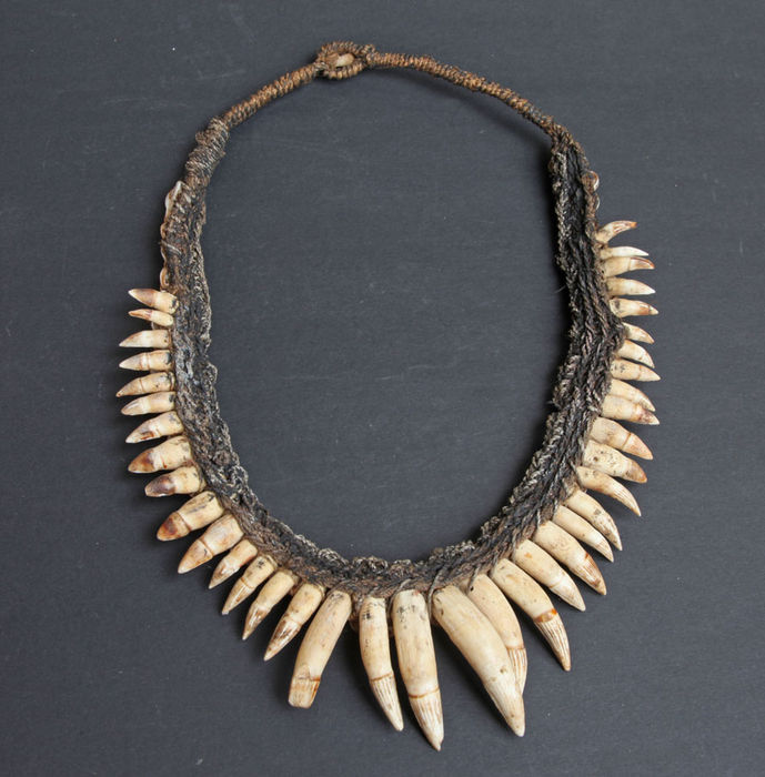 Crocodile Tooth Necklace: Necklace Of Crocodile Teeth And Shells