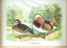 Peter J.S. Olney - The Wildfowl Paintings of Henry Jones - 1987
