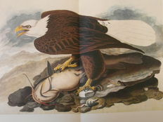 Marshall B. Davidson - The original Water-Color Paintings by John James Audubon for The Birds of America - 1966