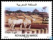 Zoo of Rabat