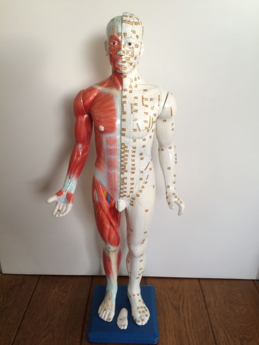 88 cm high Male Professional Medical Acupuncture and Anatomy model ...