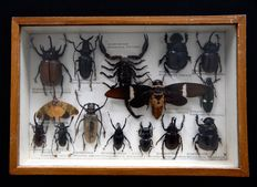 Original vintage Insect Collection - 32 x 21.5cm