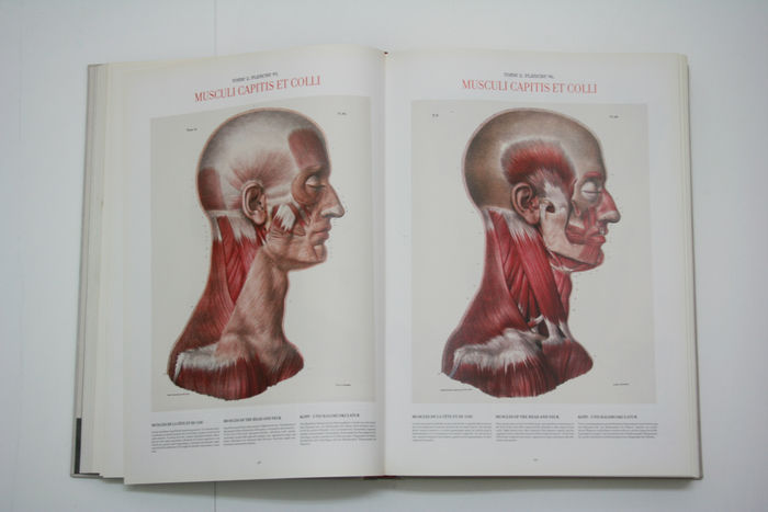 Jm Bourgery Nh Jacob Atlas Of Human Anatomy And Surgery