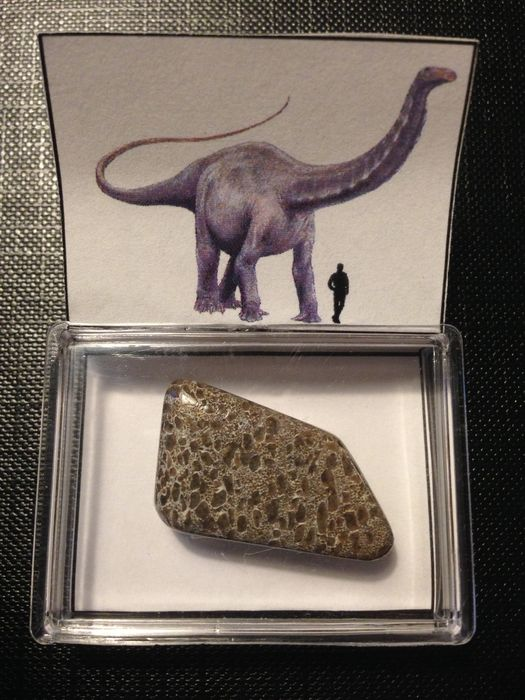 Atlasaurus gem bone - 2,7 cm