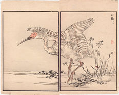 """Two separate double-bladed original Japanese Woodcuts with """"Japanese Ibis"""" between White Egret Flower and Chinese Water Chestnut by Kono Bairei - Japan - 1881"""