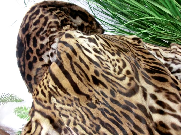 Leopardus pardalis – Ozelot fur coat – with CITES and orig  tag - Catawiki