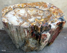 Large stem of petrified wood - 29 x 35 x 22 cm - 40 kg
