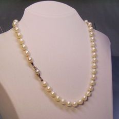 Real Japanese Akoya pearl necklace with a gold clasp