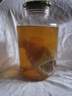 Taxidermy - cabinet of curiosity - Luminescent latern fish - abyssal anglerfish - 29cm - 150gm