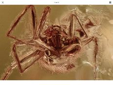 Baltic Amber Rare Goblin Spider (Superb Oonopidae) fossil inclusion + HQ picture