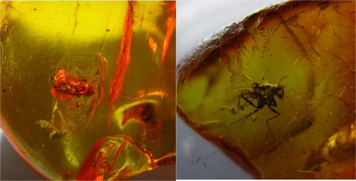 3 Fossil insects in baltic amber - 2,5 x 2,2 x 1,1 cm, 1,8 x 1,2 x 0,6cm(2)