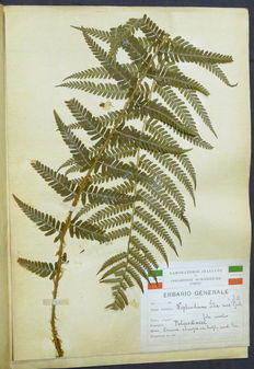 General herbarium-collection of 112 dried plants and flowers