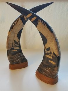 Buffalo Horns Modified
