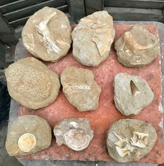 Fossil - Lot of bone fragments Mosasaurus and fossil fish (9) - 7.7 to 13 cm - 3.01 kg