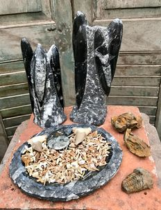 Orthoceras sculptures, Trilobites, a fossil marble Bowl with 250 fossils shark teeth and two large shark teeth