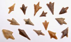 15 Neolithic arrowheads from Algeria - 17 - 31 mm (15)