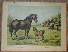 "The horse (and foal) An interesting poster for horse lovers. Utrecht edition by Kemink & Son. A poster from the series ""Lummel"" school posters"