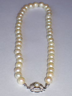 Freshwater pearl necklace with white gold clasp.