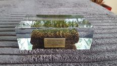 2006 World Cup - acrylic moulded piece of grass.