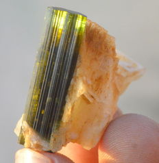 Green Cap Tourmaline -  2.8 x 2.6 x 1.7 cm - 12gm - 62ct