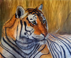 Gary Wakeham - Female Tiger