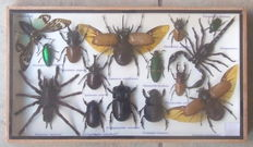 A very diverse collection of 18 different Exotic Insects - 35 x 20cm