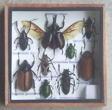 An insect collection box – 15 cm by 15 cm.