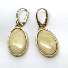 Hanging earrings with natural royal white Baltic amber (not treated) in sterling silver 925 gold plated