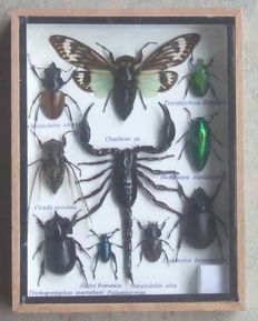 An insect collection box – 20 cm by 15 cm.