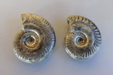 Set of 2 Torcian Ammonite *27 mm* from Aveyron