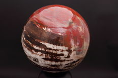 Extra large, highly polished Petrified Wood sphere - 18cm - 8kg