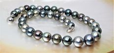 Necklace with round Tahitian cultivated pearls of 10.2 x 13.1 mm in diameter